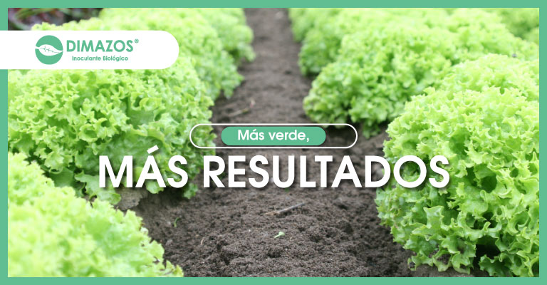 Biocultivos_Dimazos