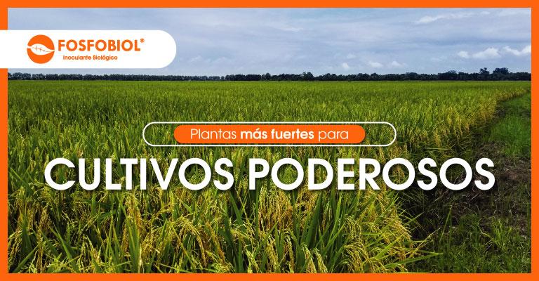 Biocultivos_Fosfobiol
